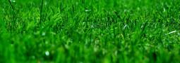 Klippa och trimma gräsmattorna